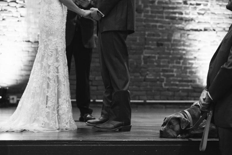 dog-in-wedding-800x534 Kristen and Nick Wedding at aVenue | Nashville, TN