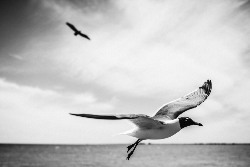 jonathan-seagull-3-800x534 Florida | Fine Art Travel Photography