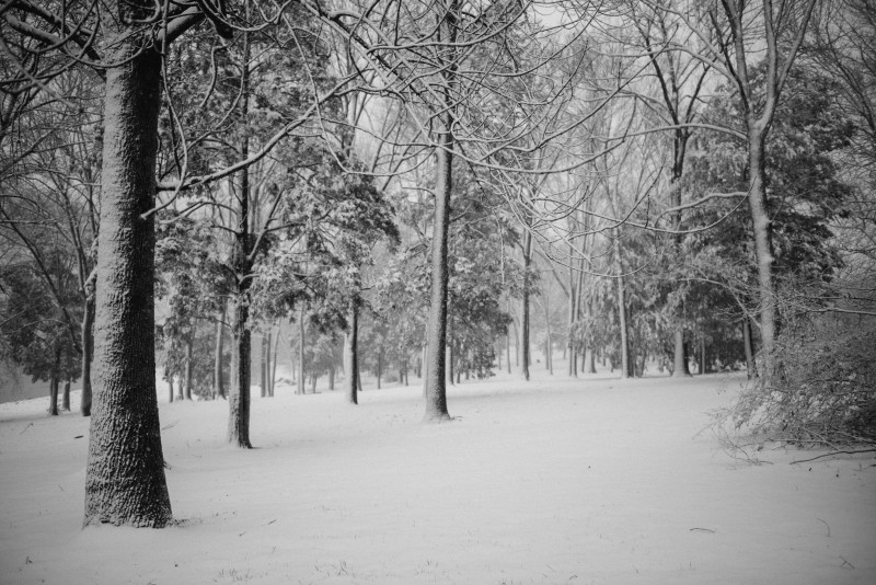 winter-2-2-800x534 Tennessee | Fine Art Travel Photography