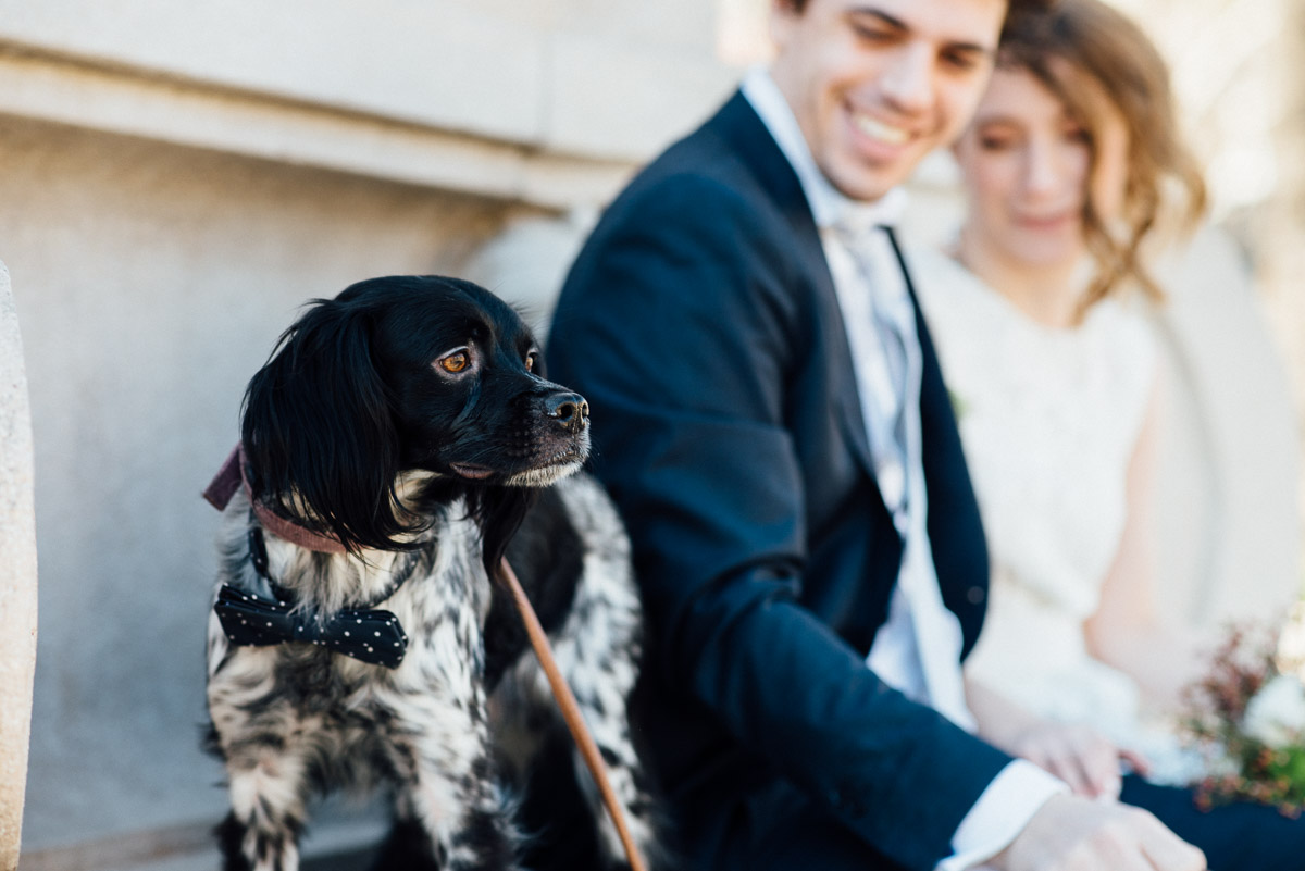 DOG-BOWTIE-WEDDING Robert + Alyssa | Barcelona Elopement Photographer